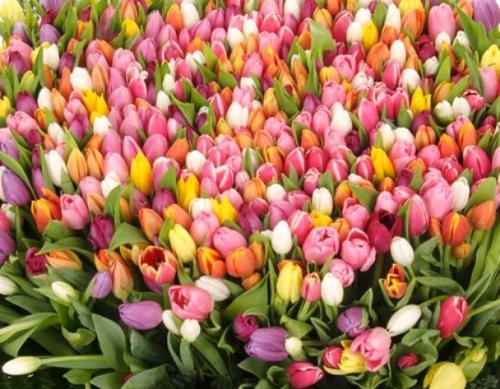 Смс поздравление с 8 марта девочкам
